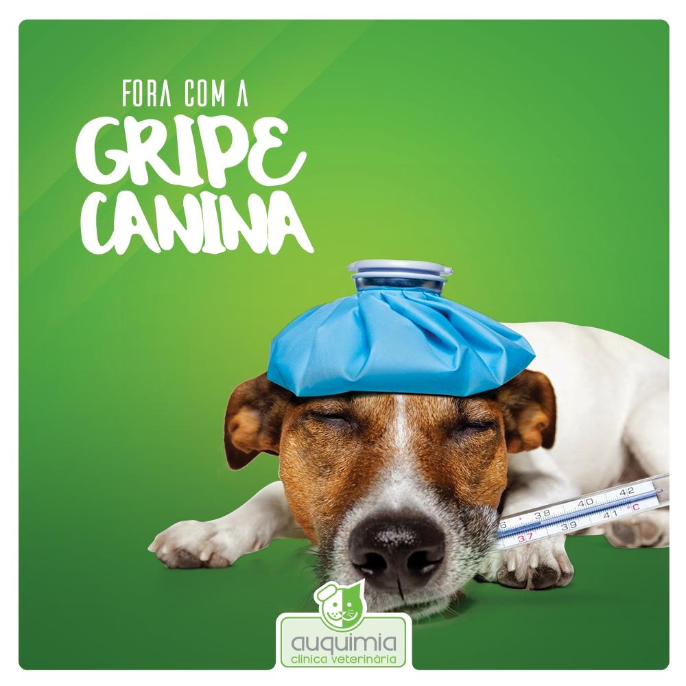 Fora com a Gripe Canina